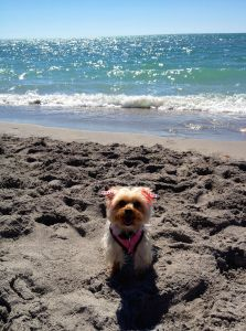 Bebe at the beach in March