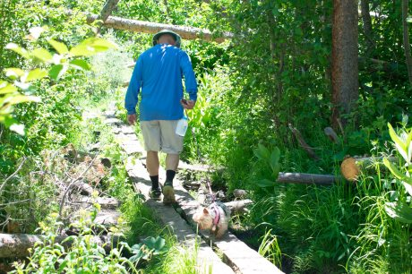 Hiking on Lily Pad trail